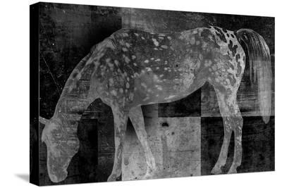 Appaloosa Mirage II-Petro Mikelo-Stretched Canvas Print