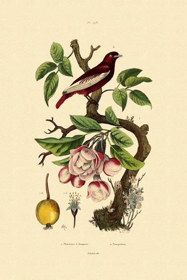 Apple, 1833-39--Giclee Print