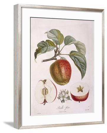 Apple Belle Fleur Henry Louis Duhamel Du Monceau, Botanical Plate by Pierre Jean Francois Turpin--Framed Giclee Print