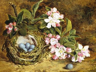 Apple Blossom and a Bird's Nest-H. Barnard Grey-Giclee Print