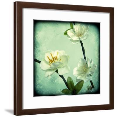 Apple Blossom II-Rossana Novella-Framed Giclee Print