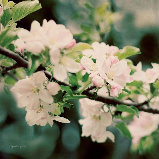 Apple Blossoms I Crop-Elizabeth Urquhart-Art Print