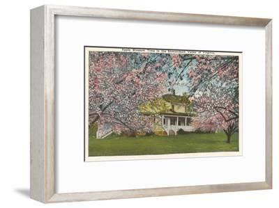 Apple Blossoms, Shenandoah Valley, Virginia