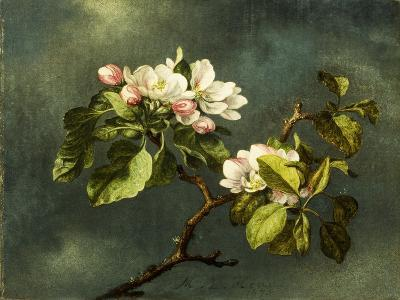 Apple Blossoms-Martin Johnson Heade-Giclee Print
