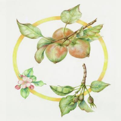 Apple Cycle-Deborah Kopka-Giclee Print