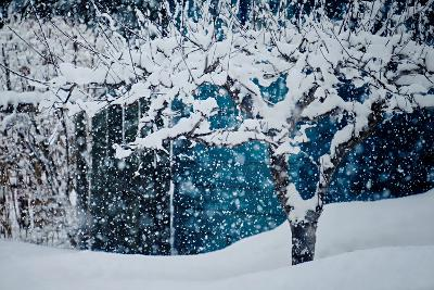 Apple Tree In Winter-Ursula Abresch-Photographic Print