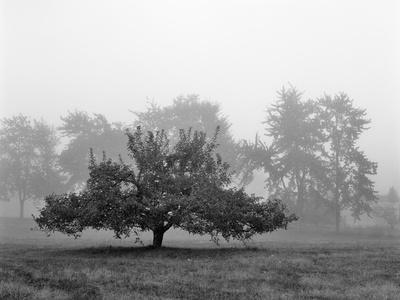 https://imgc.artprintimages.com/img/print/apple-tree-southfield-michigan-85_u-l-q1ai1tc0.jpg?p=0