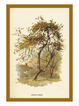 https://imgc.artprintimages.com/img/print/apple-tree_u-l-p27vvm0.jpg?p=0
