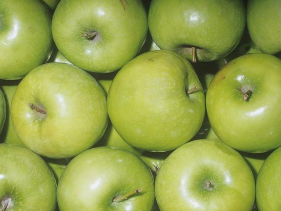Apple Variety Granny Smith (Malus Domestica), Native to Asia Minor-Ken Lucas-Photographic Print