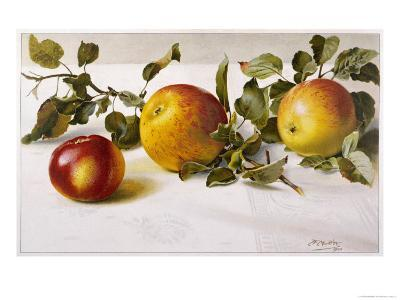 Apples and a Bit of Foliage- Moettler-Giclee Print