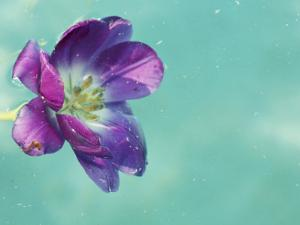 Flower Floating in Water by April Bauknight