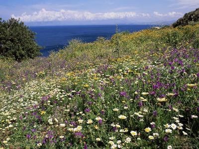 April Spring Flowers, Zingaro Nature Reserve, Northwest Area, Island of Sicily, Italy-Richard Ashworth-Photographic Print