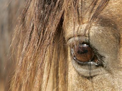 APTOPIX Mustangs Savior-Ann Heisenfelt-Photographic Print