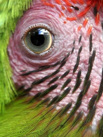 APTOPIX Nicaragua Animal Rescue-Esteban Felix-Photographic Print