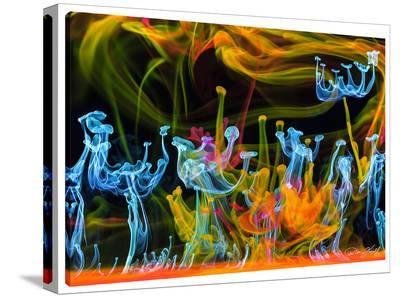Aqua Awakening-Don Farrall-Stretched Canvas Print
