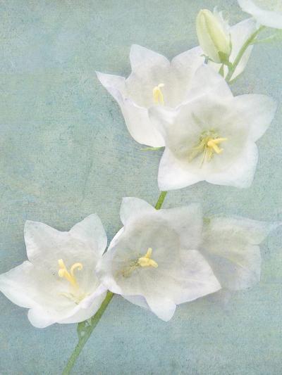 Aqua Floral IV-Amy Melious-Art Print