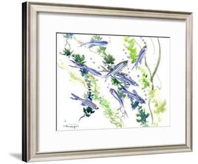 Aquarium Fish Danio-Suren Nersisyan-Framed Art Print