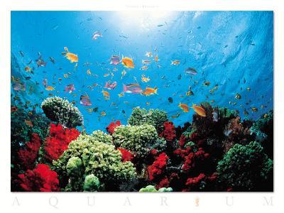 Aquarium-Federico Busonero-Art Print