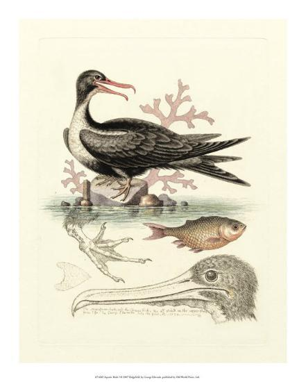Aquatic Birds I-George Edwards-Giclee Print