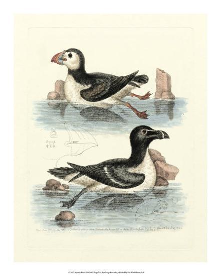 Aquatic Birds II-George Edwards-Giclee Print