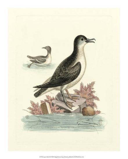 Aquatic Birds III-George Edwards-Giclee Print