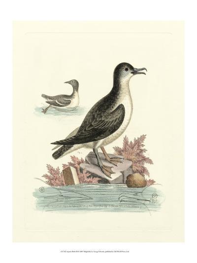 Aquatic Birds III-George Edwards-Art Print