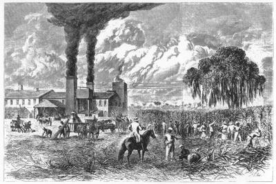 Sugar Plantation, New Orleans, 1870