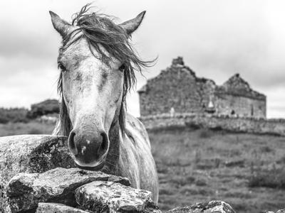 Ireland Black and White