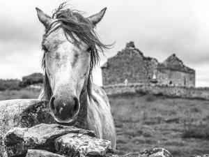 Ireland Black and White by Arabella Studios