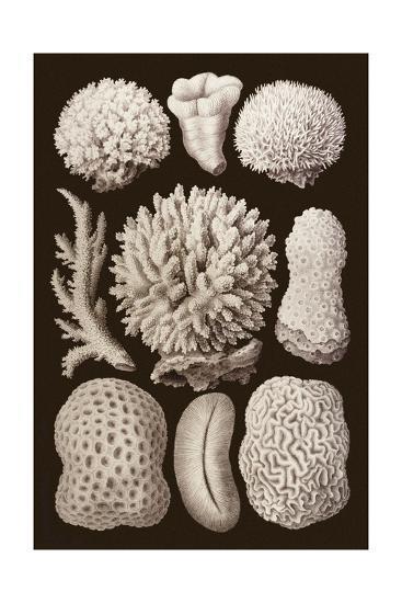 Arabian Corals, Historical Artwork, 1876-Mehau Kulyk-Giclee Print