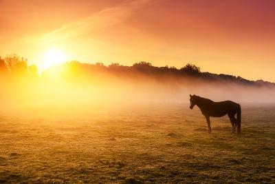 Arabian Horses Grazing on Pasture at Sundown in Orange Sunny Beams. Dramatic Foggy Scene. Carpathia-Leonid Tit-Photographic Print