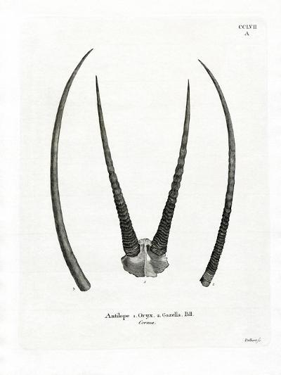 Arabian Oryx Horns--Giclee Print