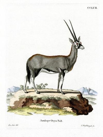 Arabian Oryx--Giclee Print