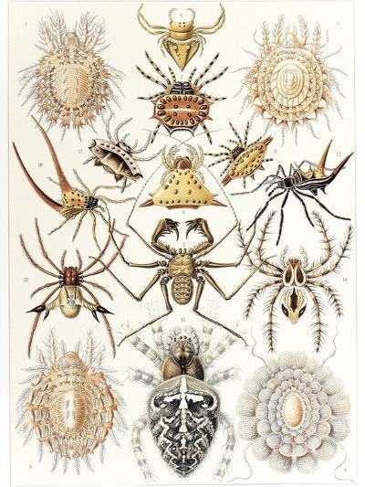 Arachnid Organisms, Artwork--Photographic Print