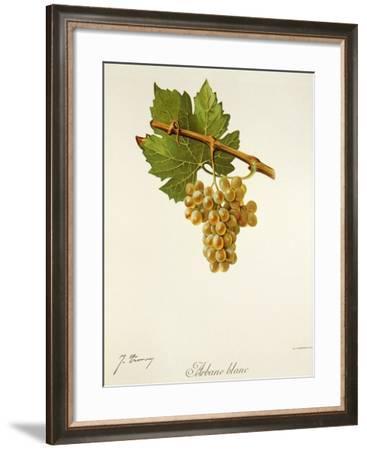 Arbane Blanc Grape-J. Troncy-Framed Giclee Print