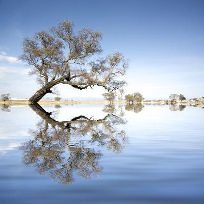 Arbol en Agua 2 Color-Moises Levy-Photographic Print