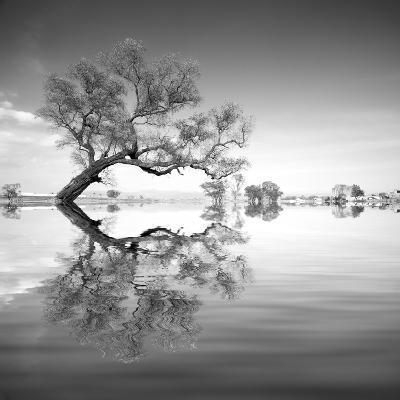 Arbol en Agua 3 BN-Moises Levy-Photographic Print