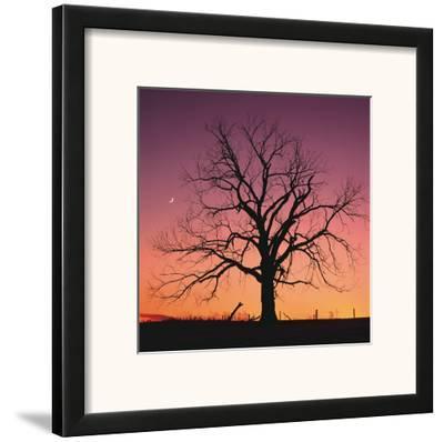 Arboral Afterglow-Leslie Mueller-Framed Art Print