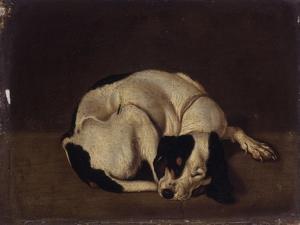 Sleeping Dog by Arcangelo Resani