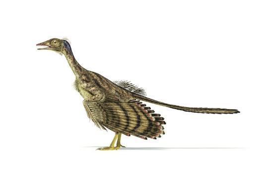 Archaeopteryx Dinosaur, Artwork--Art Print