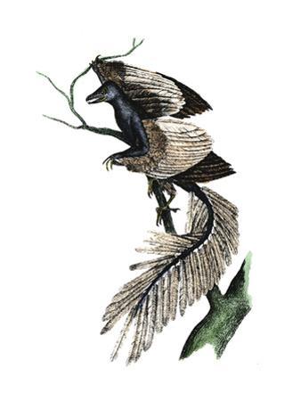 Archaeopteryx - the First Bird, 1886