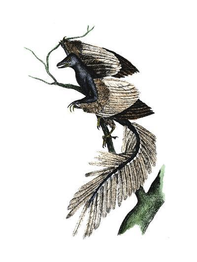 Archaeopteryx - the First Bird, 1886--Giclee Print