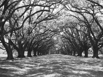 https://imgc.artprintimages.com/img/print/arched-path-of-trees-on-plantation-site_u-l-pzocil0.jpg?p=0