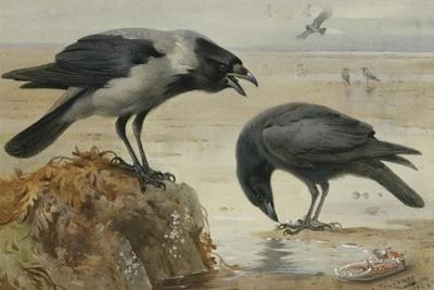 A Hooded Crow and a Carrion Crow, 1924