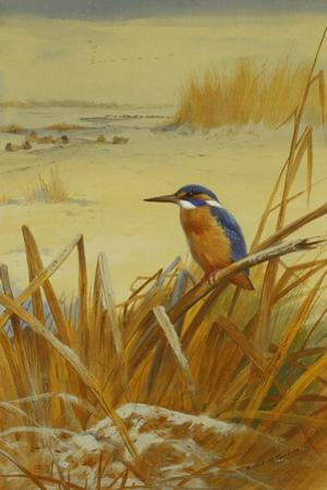 A Kingfisher Amongst Reeds in Winter, 1901