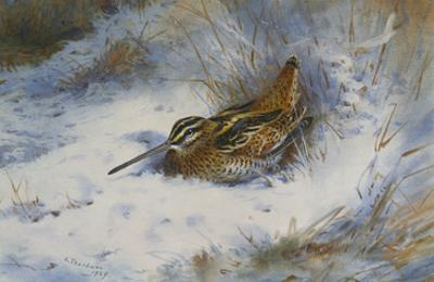 A Snipe in the Snow
