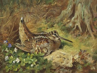 A Woodcock and Chicks