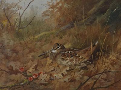 A Woodcock Nesting in Autumn Leaves