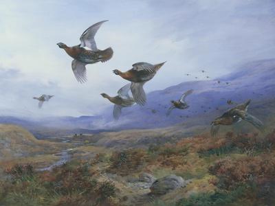 Grouse Taking Flight