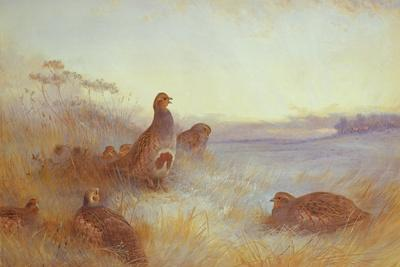 Partridges in Early Morning, 1910